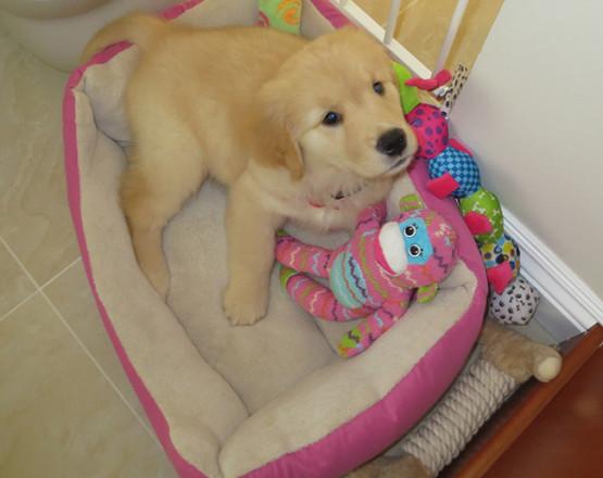 Holly puppy